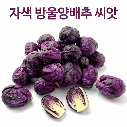 purple brussel sprouts seed  ( 50 seeds  )