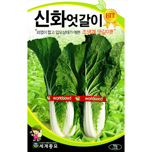 korean cabbage seed  ( 25g )