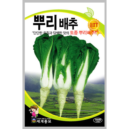 korean cabbage seed  ( 2000 seeds )