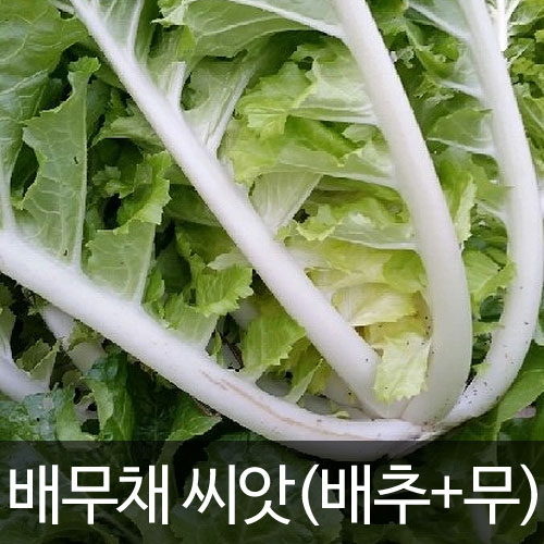 cabbage seed ( 200 seeds )