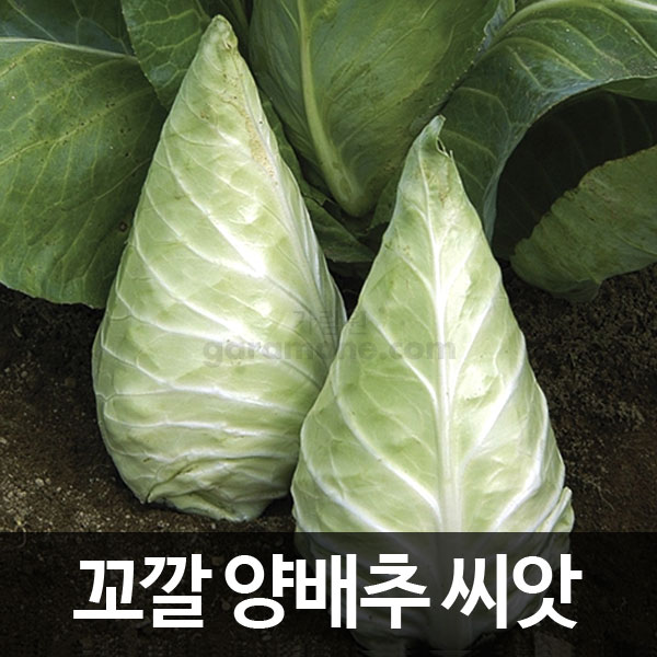 caraflex cabbage seed ( 100 seeds )