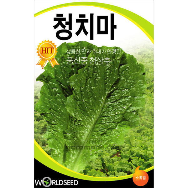 green lettuce seed  ( 3000 seeds )