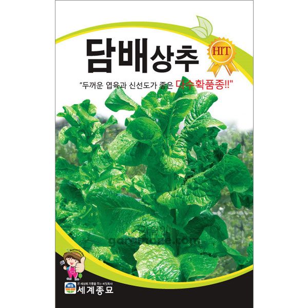 korean lettuce seed  ( 3000 seeds )