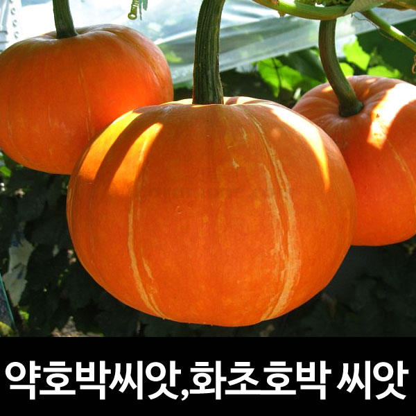 red squash seed (10 seeds)