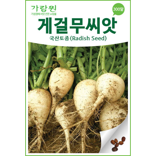 korean radish seed  ( 300 seeds )